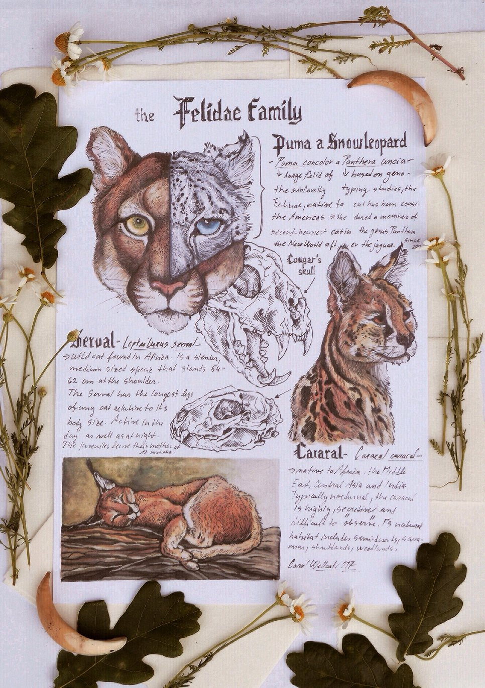 Felidae family/8.3 x 11.7in